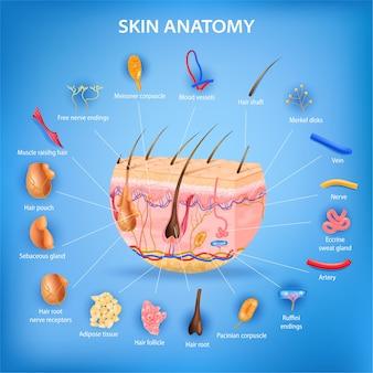 Pôster realista de anatomia da pele com camadas e ilustração de peças rotuladas