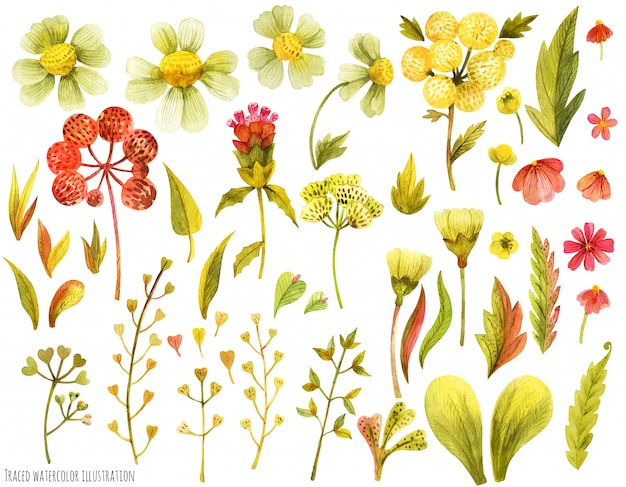 Prado flores silvestres e ervas