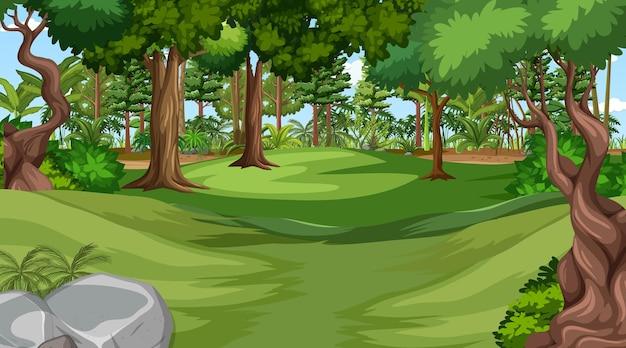 Prado vazio em cena diurna com várias árvores da floresta