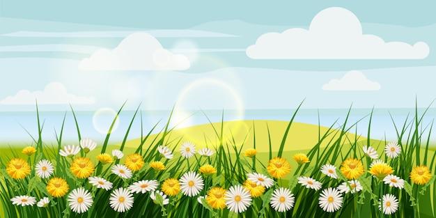 Primavera belas paisagens, campos, flores de camomila, dentes de leão, nuvens