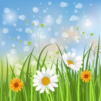 Primavera com ilustração de camomila florescendo