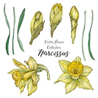 Primavera floral brilhante conjunto com flores de narciso.