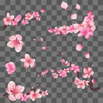 Primavera flores de cerejeira sakura florescendo