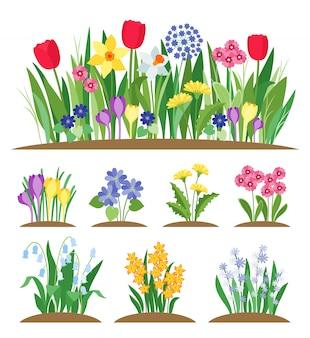 Primavera flores no jardim. grama e planta. floração do início da primavera