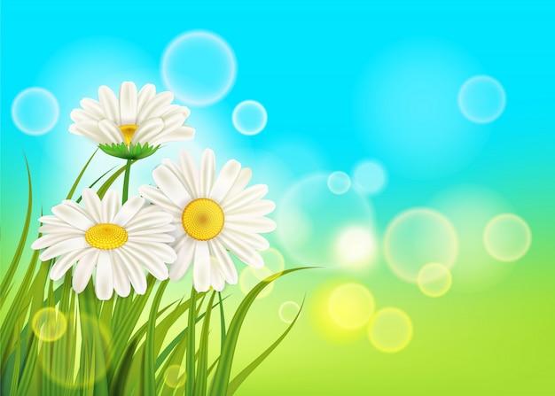 Primavera, margaridas, fundo, fresco, grama verde