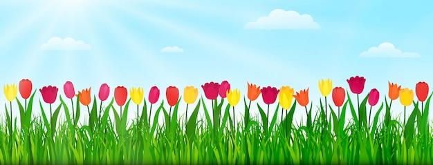 Primavera natureza paisagem com tulipas coloridas, grama verde e céu azul. ilustração