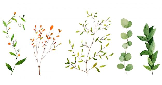 Primavera ramos e folhas coleção aquarela