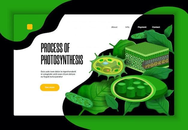 Processo de fotossíntese conceito educacional site banner design com estrutura de cloroplastos de transformação de folhas verdes de luz