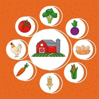 Produtos agrícolas frescos em torno do conjunto de ícones