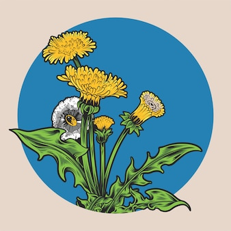 Projeto bonito da ilustração da flor do dente-de-leão