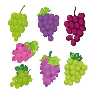 Projeto de coleção de vetor de uva
