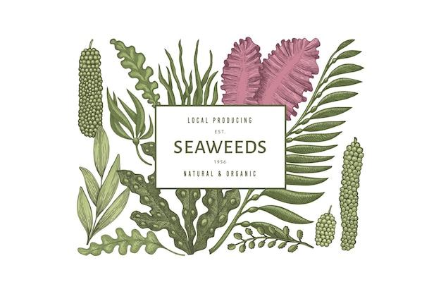 Projeto de cor de algas marinhas. mão-extraídas ilustração de algas.