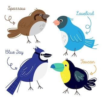 Projeto de desenho de coleção de pássaros