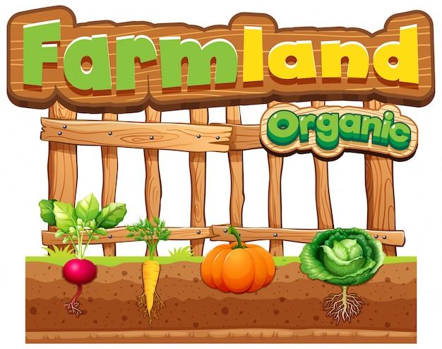 Projeto de fonte para terras agrícolas de palavra com legumes frescos