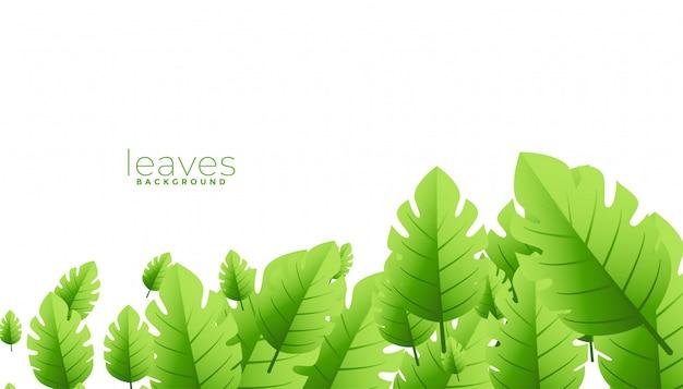 Projeto de plano de fundo de folhas verdes exóticas tropicais