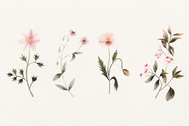 Projeto vintage de coleção de flores de botânica