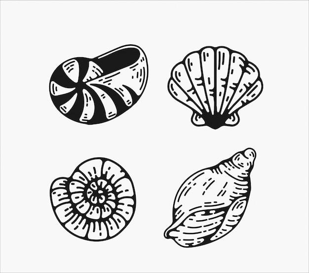 Projetos de ilustração vetorial vintage concha.