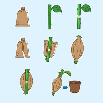 Propagação de plantas