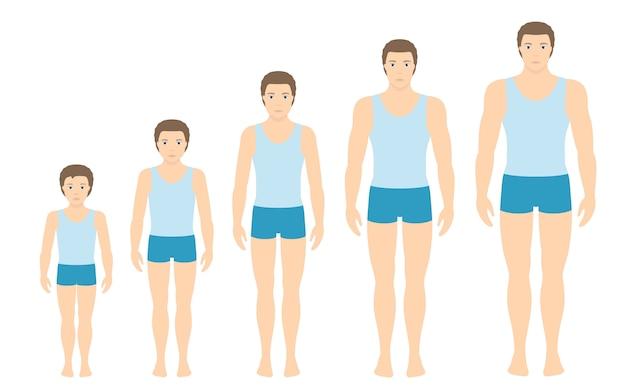 Proporções do corpo do homem mudando com a idade.