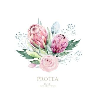Protea aquarela mão ilustrações desenhadas