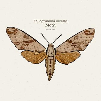 Psilogramma increta, o hawkmoth cinzento liso, mão desenhar vetor de esboço.