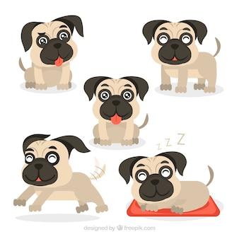 Pugs engraçados com design plano