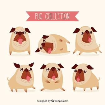 Pugs engraçados com estilo original