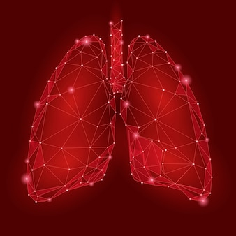 Pulmões de órgãos internos humanos. tecnologia low poly