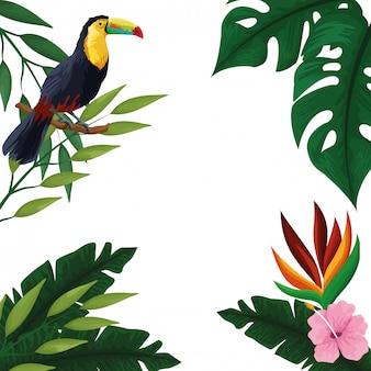 Quadro de cartão em branco tropical de verão