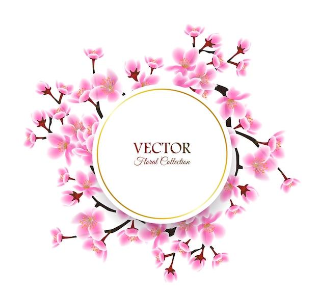 Quadro de flor de cerejeira primavera isolado modelo de texto redondo com moldura de sakura