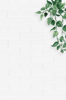 Quadro de folhas de camélia em branco
