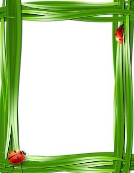 Quadro de grama com joaninhas. ilustração vetorial