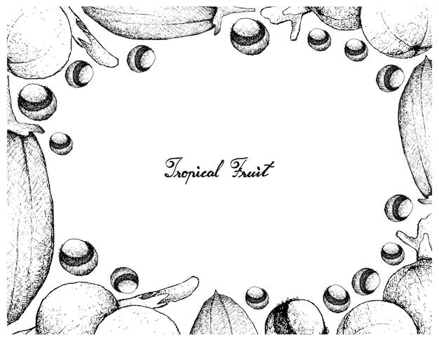Quadro desenhado a mão de baobá e frutas cambuca
