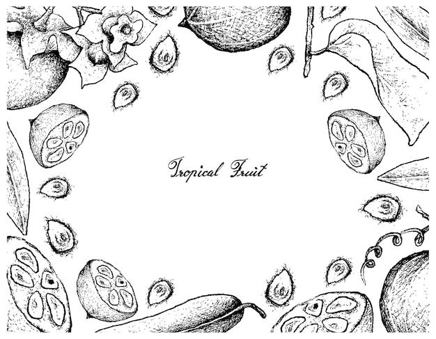 Quadro desenhado a mão de diospyros malabarica e monk fruit