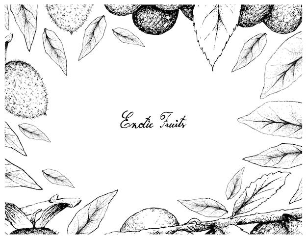 Quadro desenhado a mão de diospyros rhombifolia e ameixa damson