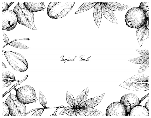 Quadro desenhado à mão de goiaba de limão e frutas jaracatia
