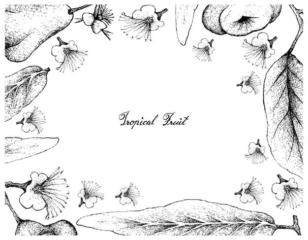 Quadro desenhado de mão de java e watery rose apple
