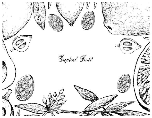 Quadro desenhado de mão de limão e frutas canistel