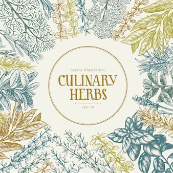 Quadro desenhado mão de ervas e especiarias culinárias.
