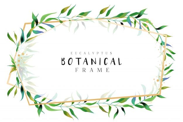 Quadros botânicos de eucalipto