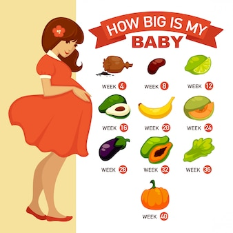 Quão grande é o meu bebê. ilustração do conceito de infográfico de gravidez.
