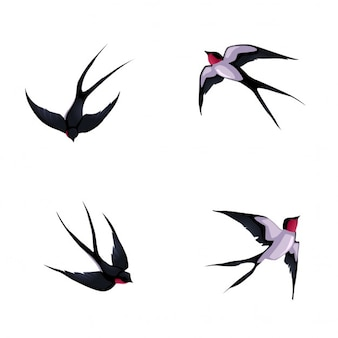 Quatro andorinhas desenhos animados do vetor isolado animais