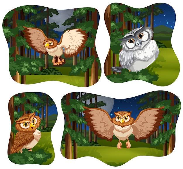 Quatro cenas de floresta com coruja voando