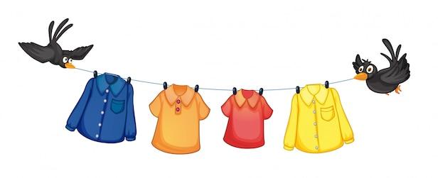 Quatro, diferente, roupas, penduradas, com, pássaros