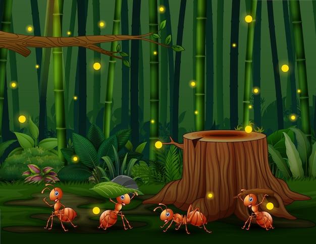 Quatro formigas felizes na floresta de bambu com vaga-lumes