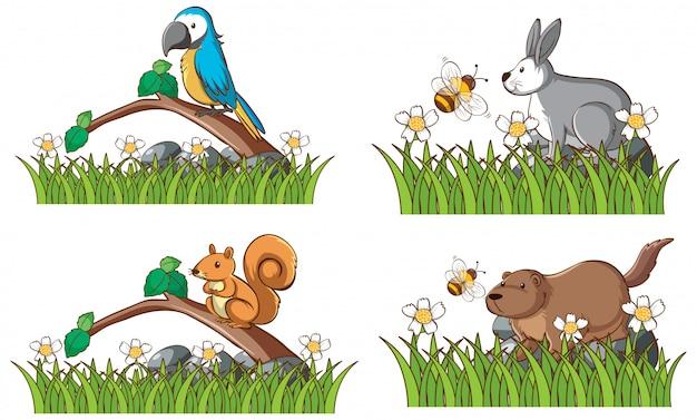 Quatro tipos de animais no jardim