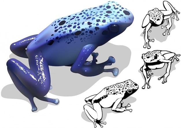 Rã azul do dardo do veneno (azureus de dendrobates)