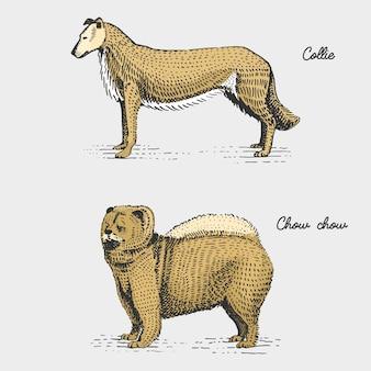 Raças de cães gravadas, ilustração desenhada à mão em estilo xilogravura
