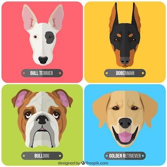 Raças de cães