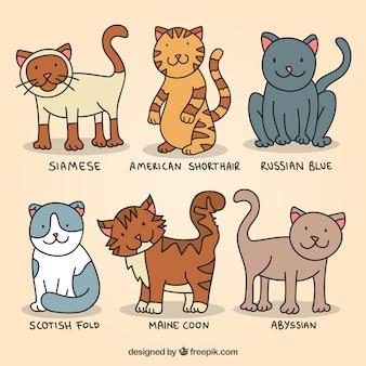 Raças gato bonito desenhados mão